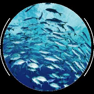 Fish Shoal